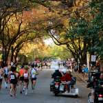 Tree-lined Street As the course weaves through the north side, participants are treated to tree-lined streets.
